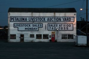 Petaluma Livestock Auction.jpg